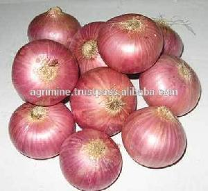 Wholesale price of Red big onion