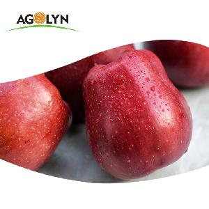 AGOLYN Chinese fresh red delicious fruit tianshui huaniu apple