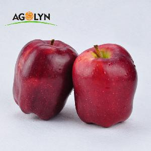China Tianshui  Organic   Sweet Red   Fresh   apple  for sale