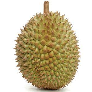 HIGH QUALITY FRESH DURIAN FROM VIET NAM