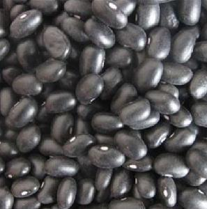 High Quality Black Kidney Beans