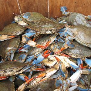 Frozen King Crabs / Live King Crab / King Crab Legs