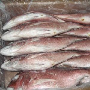 Worldwide Demand Best Quality Frozen Fresh Sea Bream