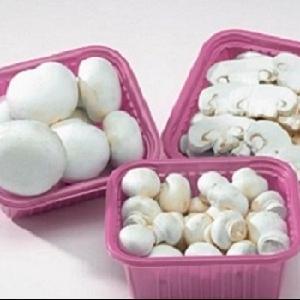 IQF  Frozen Champignons /  White  Mushroom