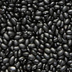 Export Good Quality Fresh Chinese Black Kidney Bean.