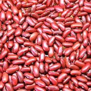 NEW CROP BEST QUALITY BEANS DRY PINTO BEANS LIGHT SPECKLED KIDNEY BEAN FOR SALE