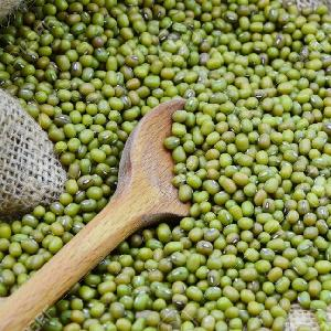 HIGH QUALITY Green Mung Beans/Vigna Beans/Sprouting New Crop 2019 MUNG BEANS FOR SALE
