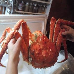 Wholesale Frozen King Crabs / Live King Crab / King Crab Legs from Brazil