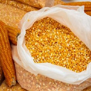 Yellow Corn/ Maize for Animal Feed / YELLOW CORN for POULTRY FEED
