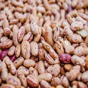 Bulk American  Round   Light   Speckled   Kidney   Bean s, LSKB ,Pinto/ Cranberry