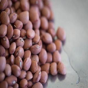 Ukraine  new   crop  good quality light speckled Pinto Kidney Bean