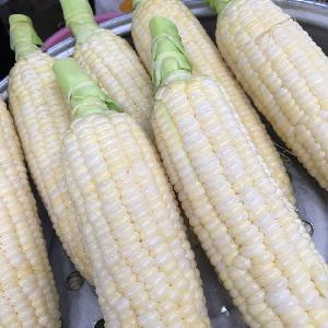 GRADE A WHITE AND YELLOW CORN FOR HUMAN CONSUMPTION
