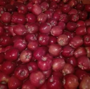 Fresh Fruit Huaniu Fresh Apples