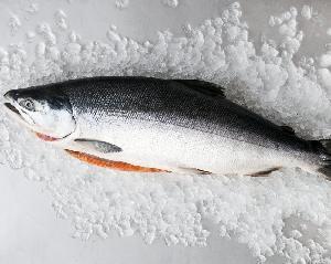 Fresh and Frozen Atlantic Salmon Fish/Whole frozen salmon