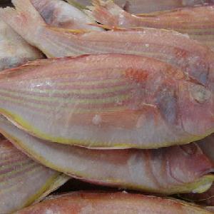 Wholesale Frozen Sea Bream Whole/Frozen Pacific Ocean Perch Fish