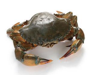 Live  Mud  Crab/Frozen Seafood/Frozen Green  Mud  Crab
