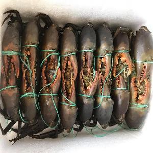 Healthy Live Mud Crab Indonesia