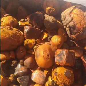 Natural Dried Cattle OX Gallstones