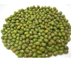 fresh high quality  myanmar  green mung bean good quality