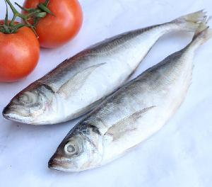 Quality frozen seafood horse mackerel fish with factory price