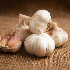 Garlic Mersley Wight bulbs Softneck