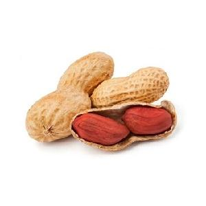 Red Skin Peanuts / Blanched Peanut Kernels / Roasted and Salted Redskin Peanuts for sell