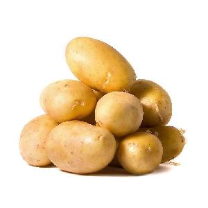 2019 fresh Holland potato from china new  farm   supply ing all the year round