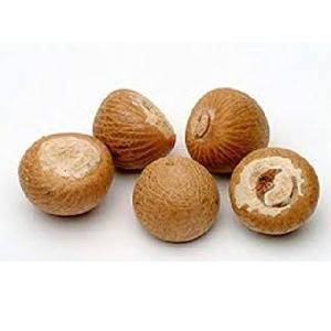 Betel   Nut  / Vietnam Product / High Quality / Best