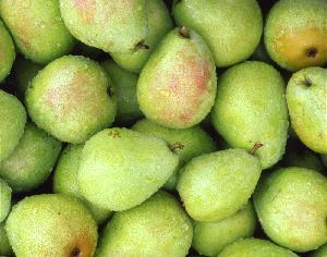 High Quality Fresh  Fruit  Sweet  Nutrition  Pear