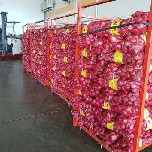 High Quality Onion/Fresh Red/Yellow and White Onion