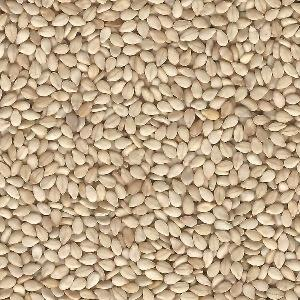 Top Quality hulled white sesame seed for oil