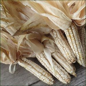 White Corn Flour / White Maize Flour