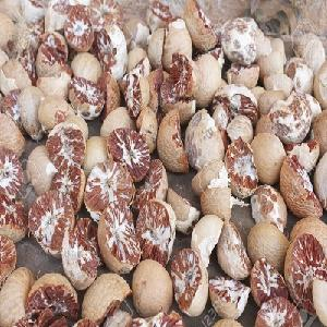 High Quality Dried Betel Nuts/Whole Betel Nuts for sale