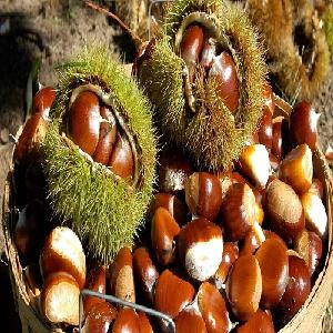 sweet organic Roasted whole chestnuts in bags