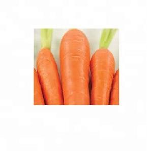 Fresh Carrots,Frozen Fresh Carrot,Red Fresh carrot