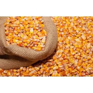 Pop  Corn  Maize/Pop corn  Maize kernel Pop corn  Butterfly and Mushroom  Types