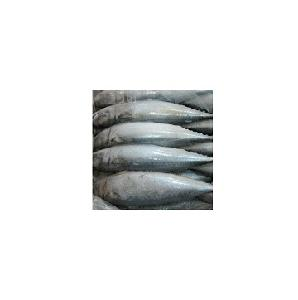frozen India  horse   mackerel   Whole   Round  for sale