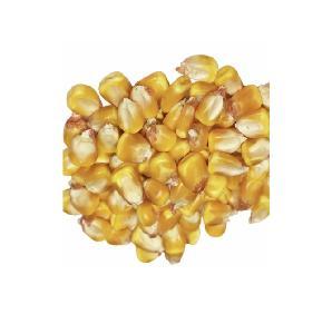 Yellow Corn   White Corn Maize for Human   Animal Feed