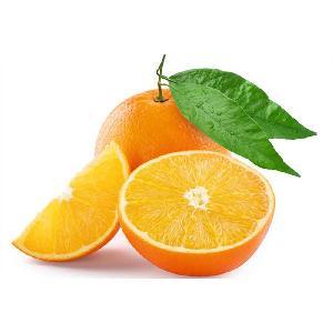 South Africa Export Cheap Bulk fresh orange valencia