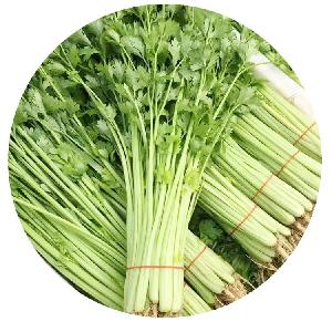 Wholesale  4 -Season Chinese Vegetable Hybrid Small Celery Seeds