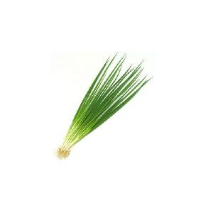 New 2020 hot sell Hybrid vegetables seeds for Resistance Scallion Seeds Green Chinese Onion seed Chinese chives seeds