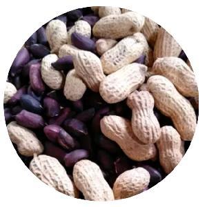 2020 Hot sale high quality Hybrid vegetables seeds for Black peanuts