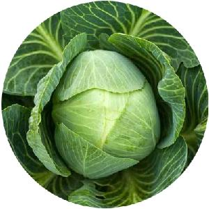 2020 wholesale high quality  Hybrid   vegetable s  seeds  for Zhonggan 101 Cabbage
