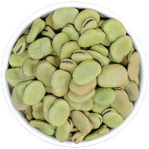 Wholesale bulk Big size Broad beans with Low price and good quality
