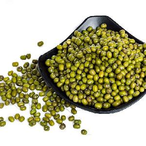 Supply green  mung   bean s  seed s 3.2mm to 3.8 mm size of green  mung   bean s
