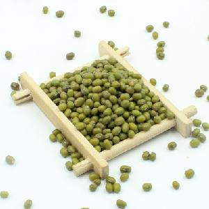 Good Quality Wholesale Big Size New Crop Price of Green Mung Beans