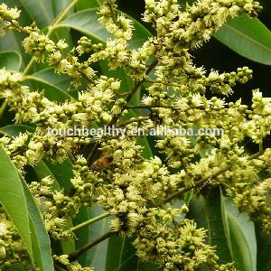 Outdoor  landscaping plant sapindus mukorossi tree seeds