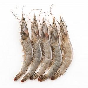Frozen Fresh Shrimp/Seafood/Black Tiger Prawn