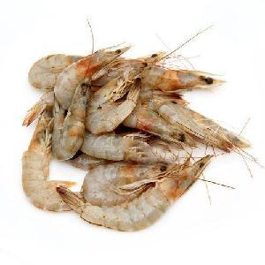 deep sea frozen  headless   black   tiger   shrimp