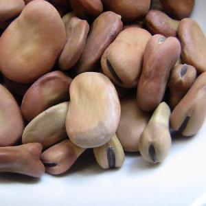 Best Price peeled dry whole split broad bean/faba bean/fava bean